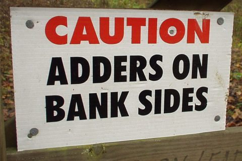 adders on bank